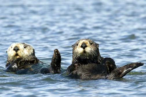 The cost of watching otters at play: a case of the warm fuzzies.