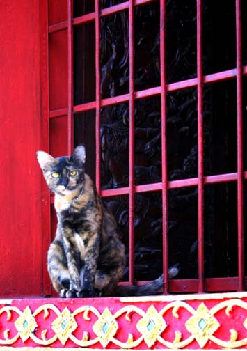 You won't run across many visitors or monks at Wat Phabong, but the temple cat is quite attentive.