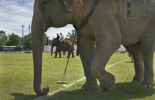 The 13th Annual King's Cup Elephant Polo Tournament is coming to Bangkok this weekend.